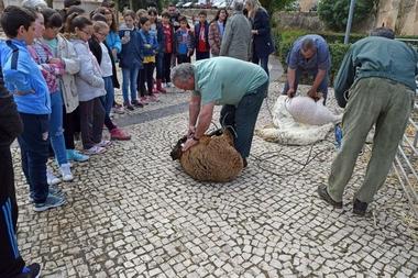La actividad Esquila Didáctica trasladará a escolares extremeños nociones sobre la trashumancia y el ganado ovino